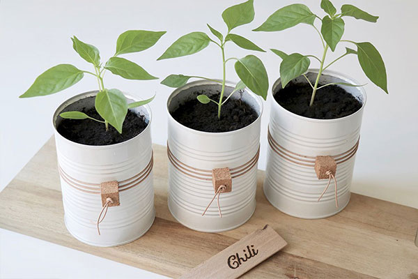 Upcycling latas e vazos para plantas