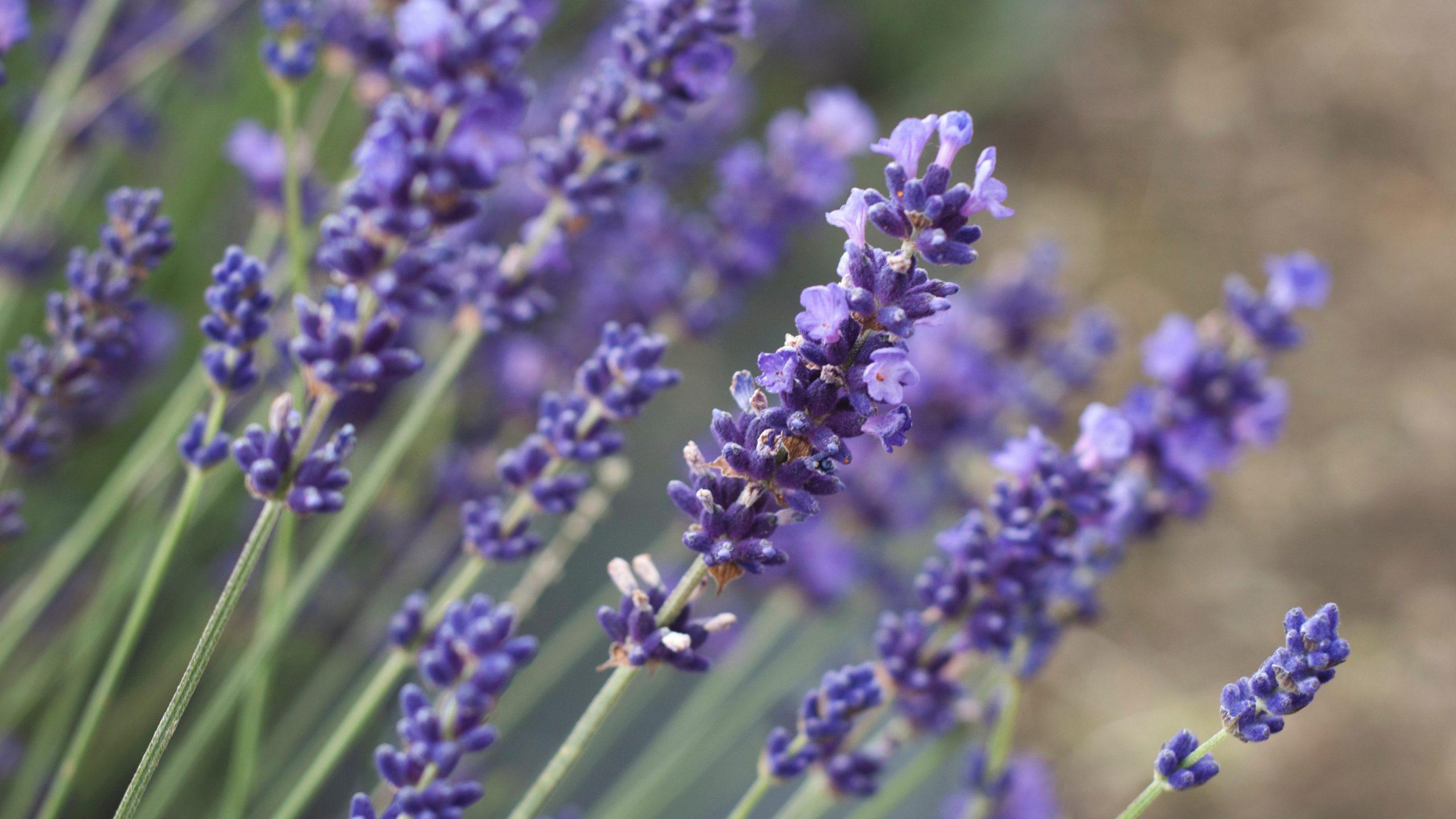 4 dicas de aromas que podem te ajudar no dia a dia